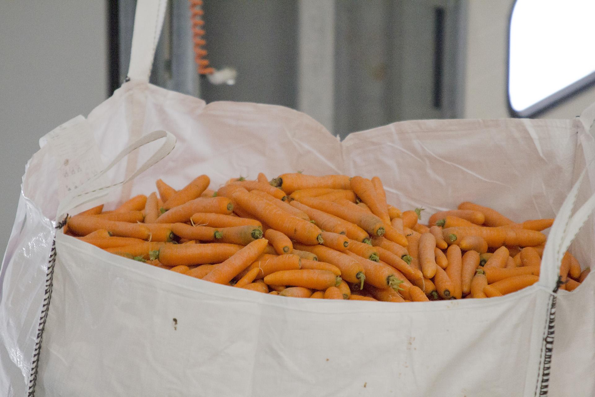 Van Woerden Flevo - biologische wortel in bigbag